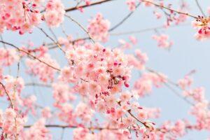 wiosna i pogoda - idiomy angielskie
